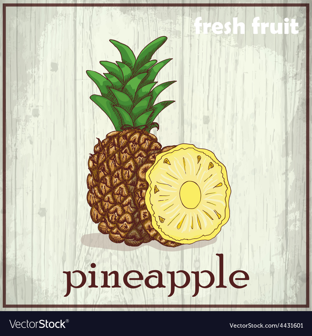 Hand drawing of pineapple fresh fruit sketch vector   Price: 1 Credit (USD $1)