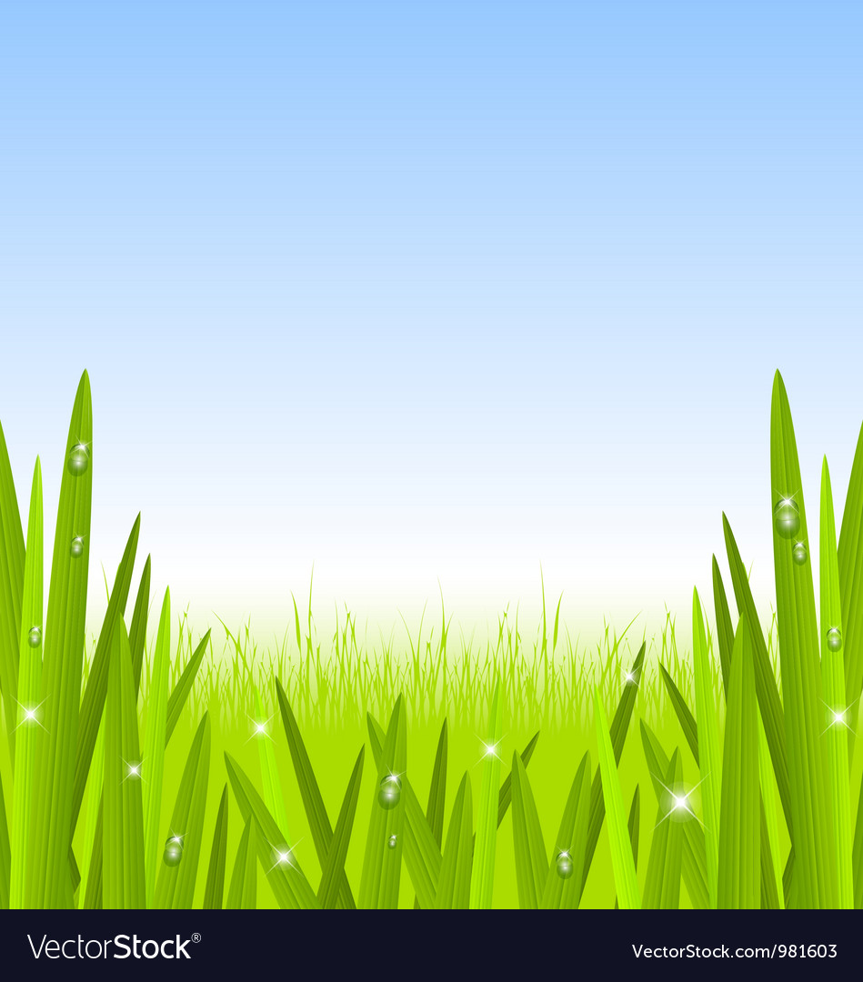 Morning grass copyspace vector | Price: 1 Credit (USD $1)