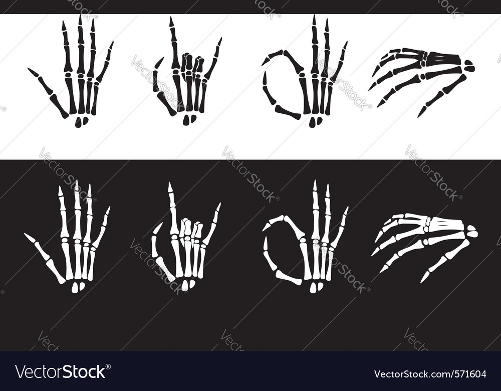 Set of hand anatomy vector | Price: 1 Credit (USD $1)