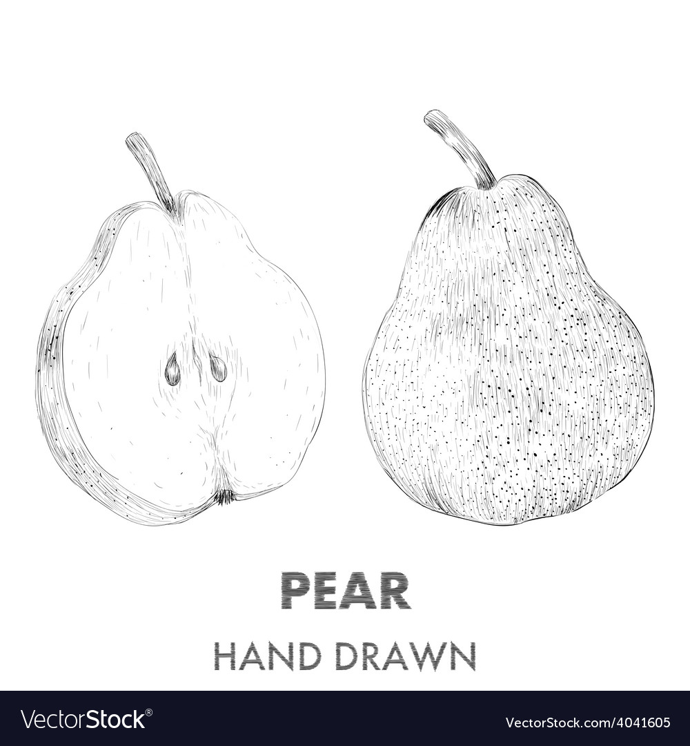 Sketch of pear hand drawn fruit collection vector | Price: 1 Credit (USD $1)
