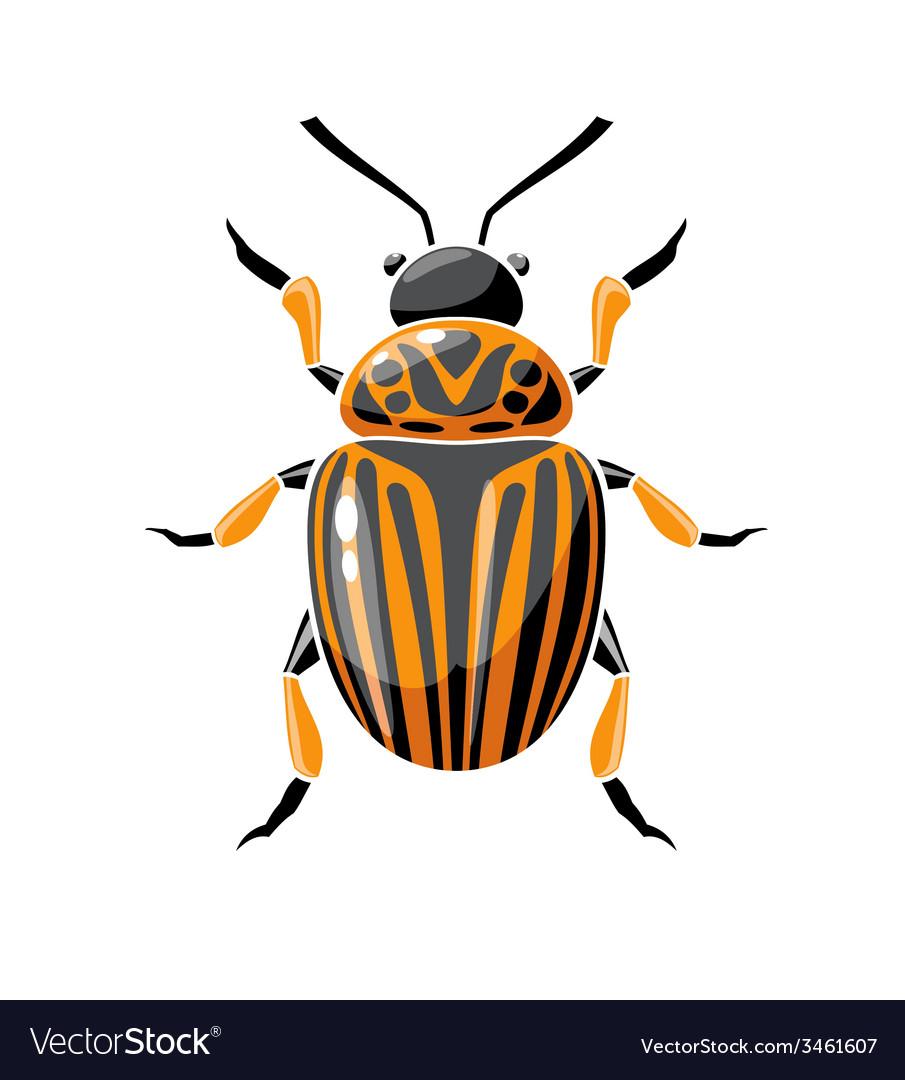 Colorado beetle vector | Price: 1 Credit (USD $1)