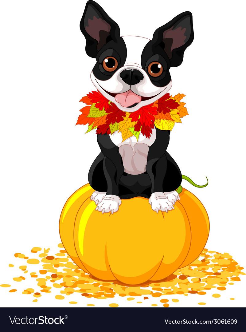 Boston terrier vector   Price: 1 Credit (USD $1)