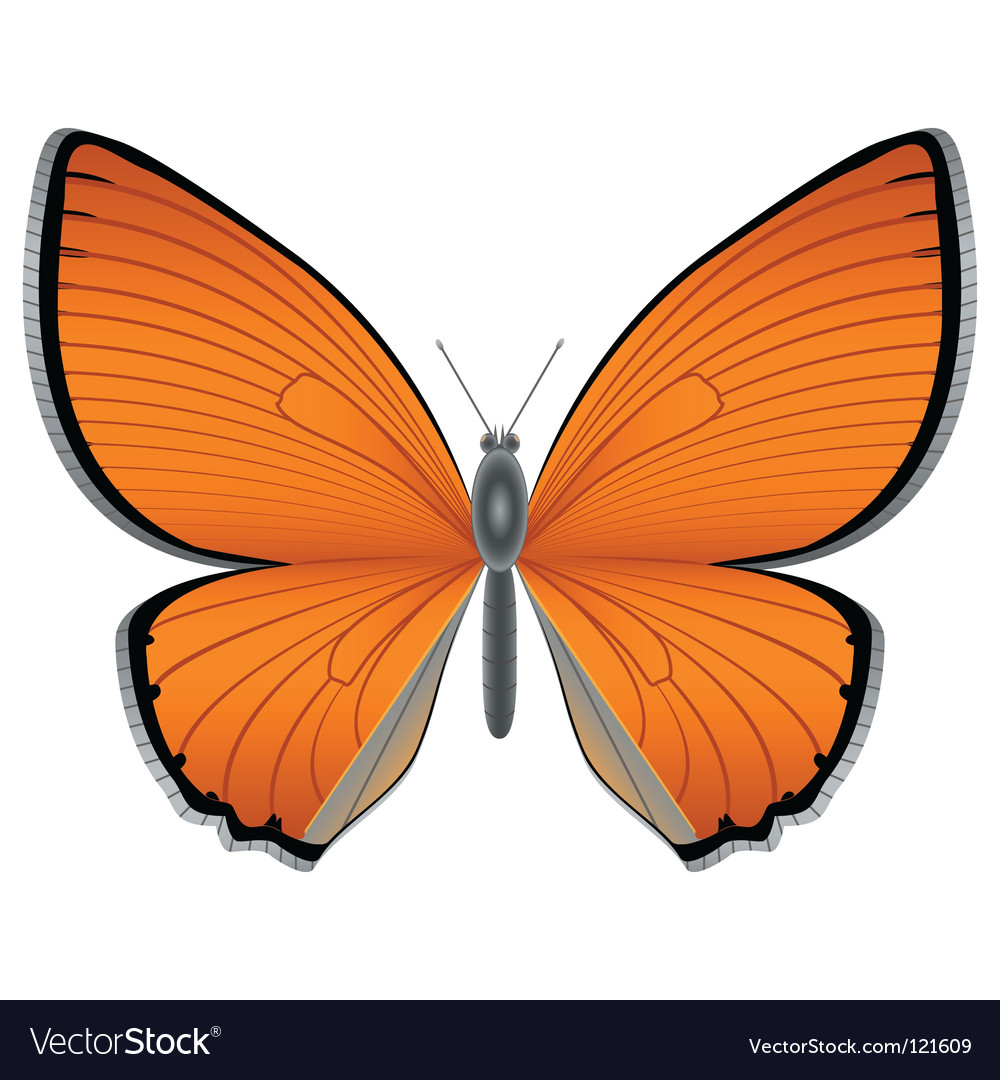 Orange butterfly vector | Price: 1 Credit (USD $1)