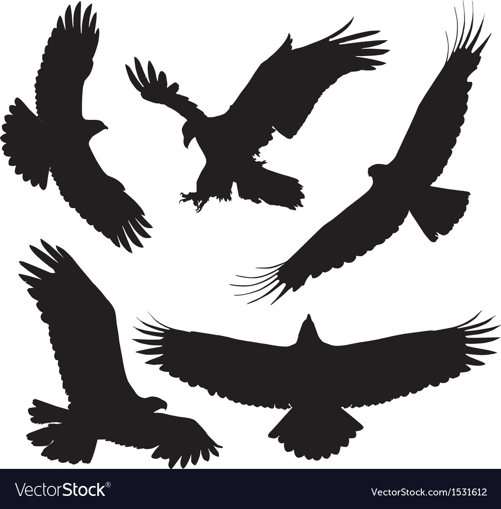 Eagle silhouette vector | Price: 1 Credit (USD $1)