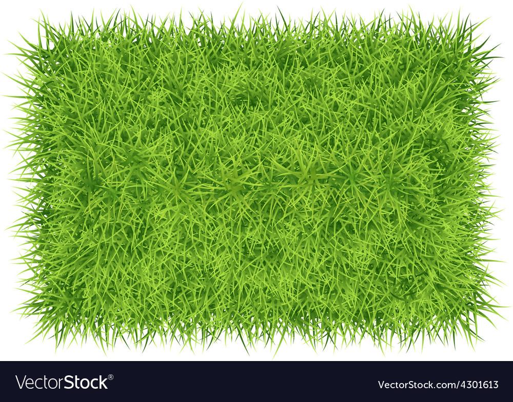 Grass carpet background vector | Price: 3 Credit (USD $3)