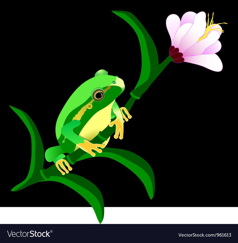 Green frog vector   Price: 1 Credit (USD $1)