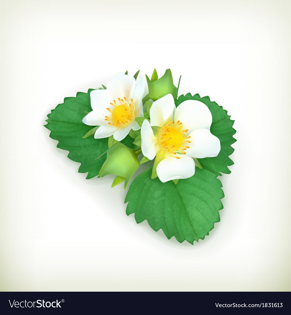 Strawberry plant vector | Price: 1 Credit (USD $1)