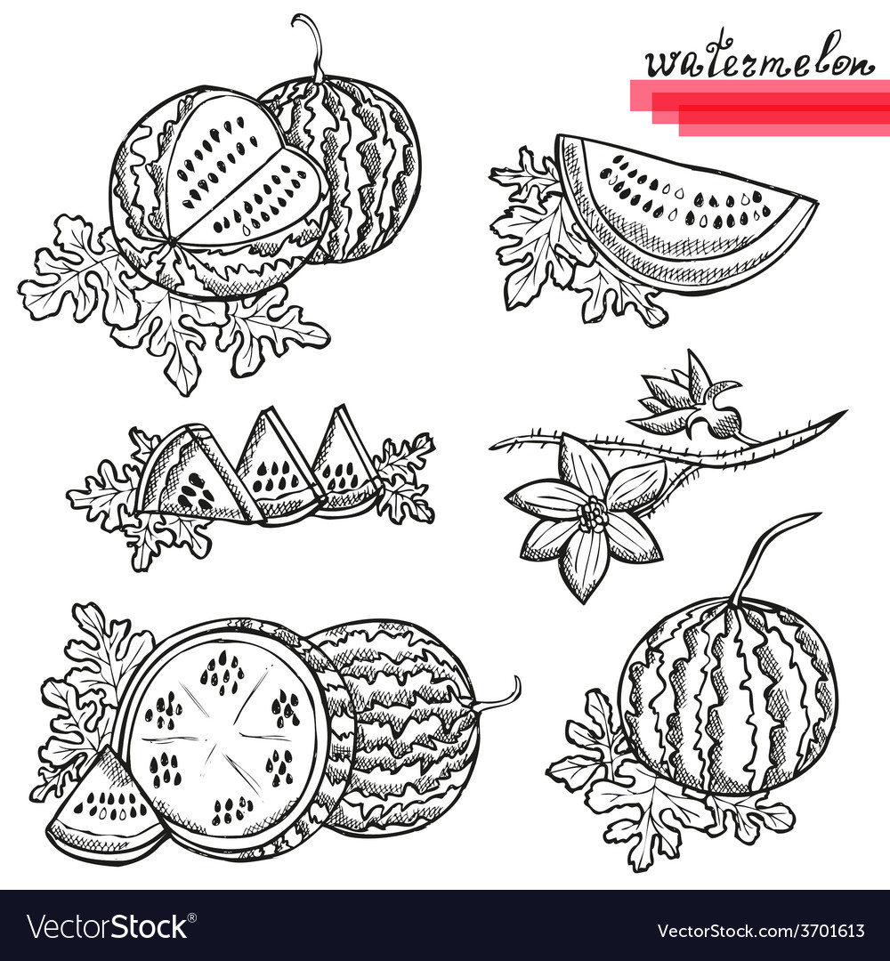 Watermelons vector | Price: 1 Credit (USD $1)