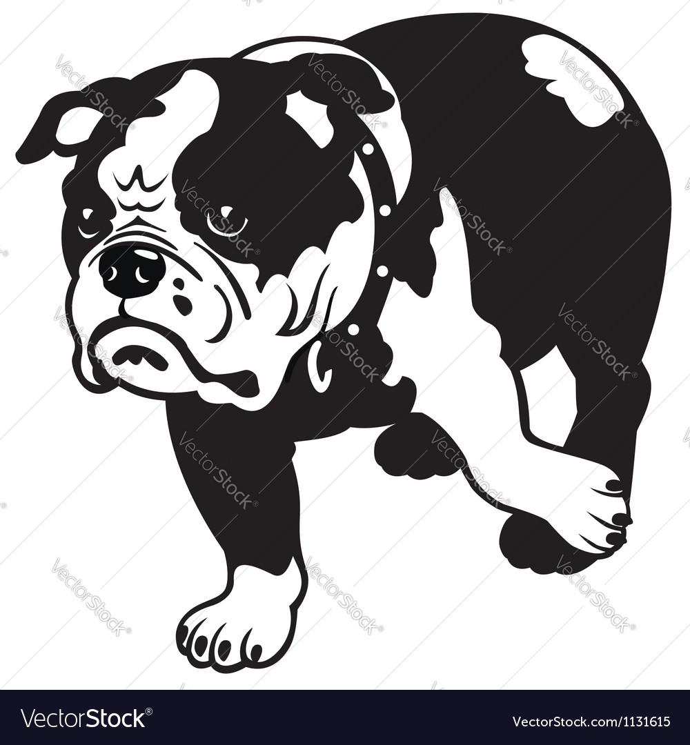 English bulldog black and white vector | Price: 1 Credit (USD $1)