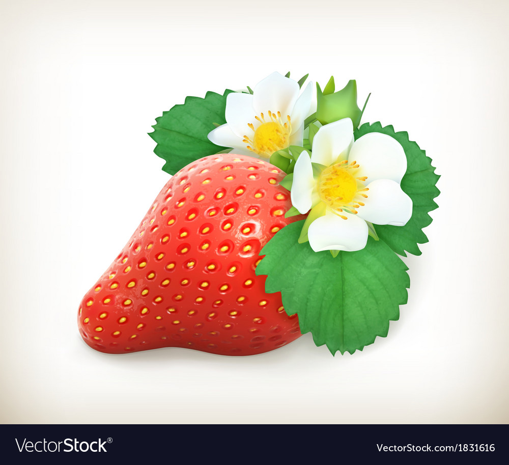 Strawberry with leaves and flowers vector | Price: 1 Credit (USD $1)