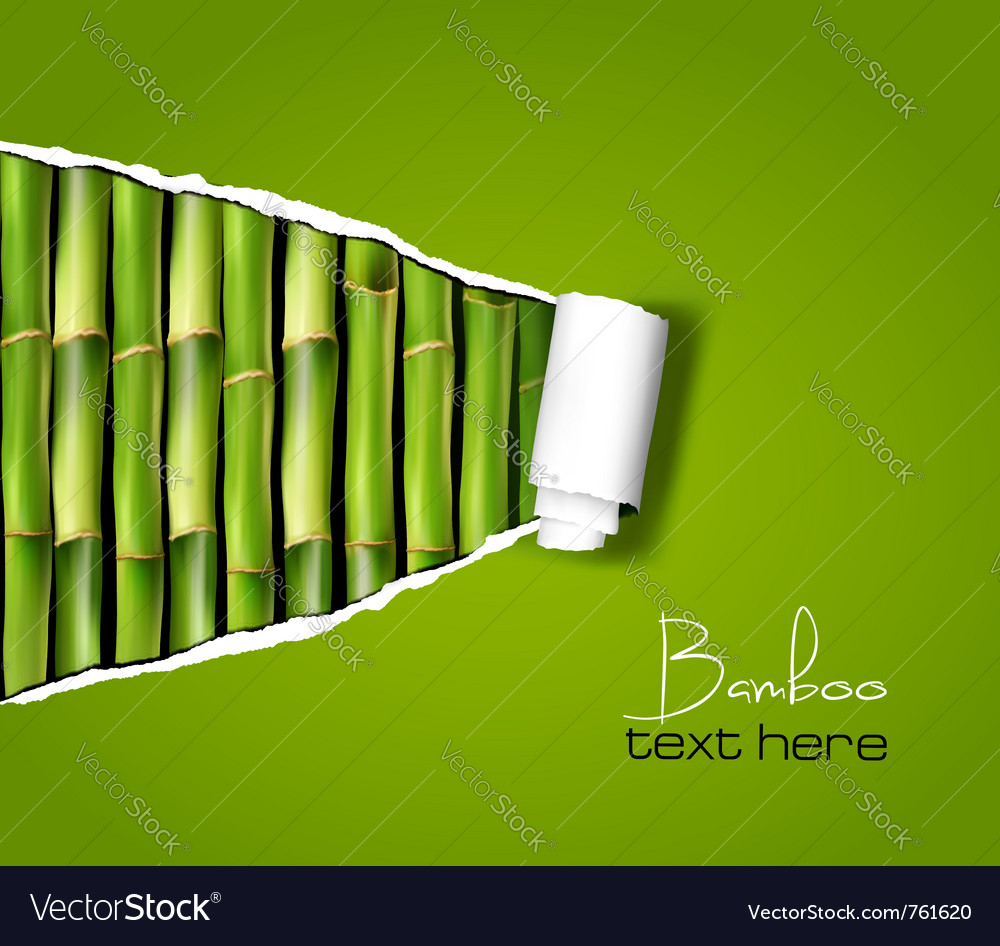 Bamboo background vector | Price: 1 Credit (USD $1)