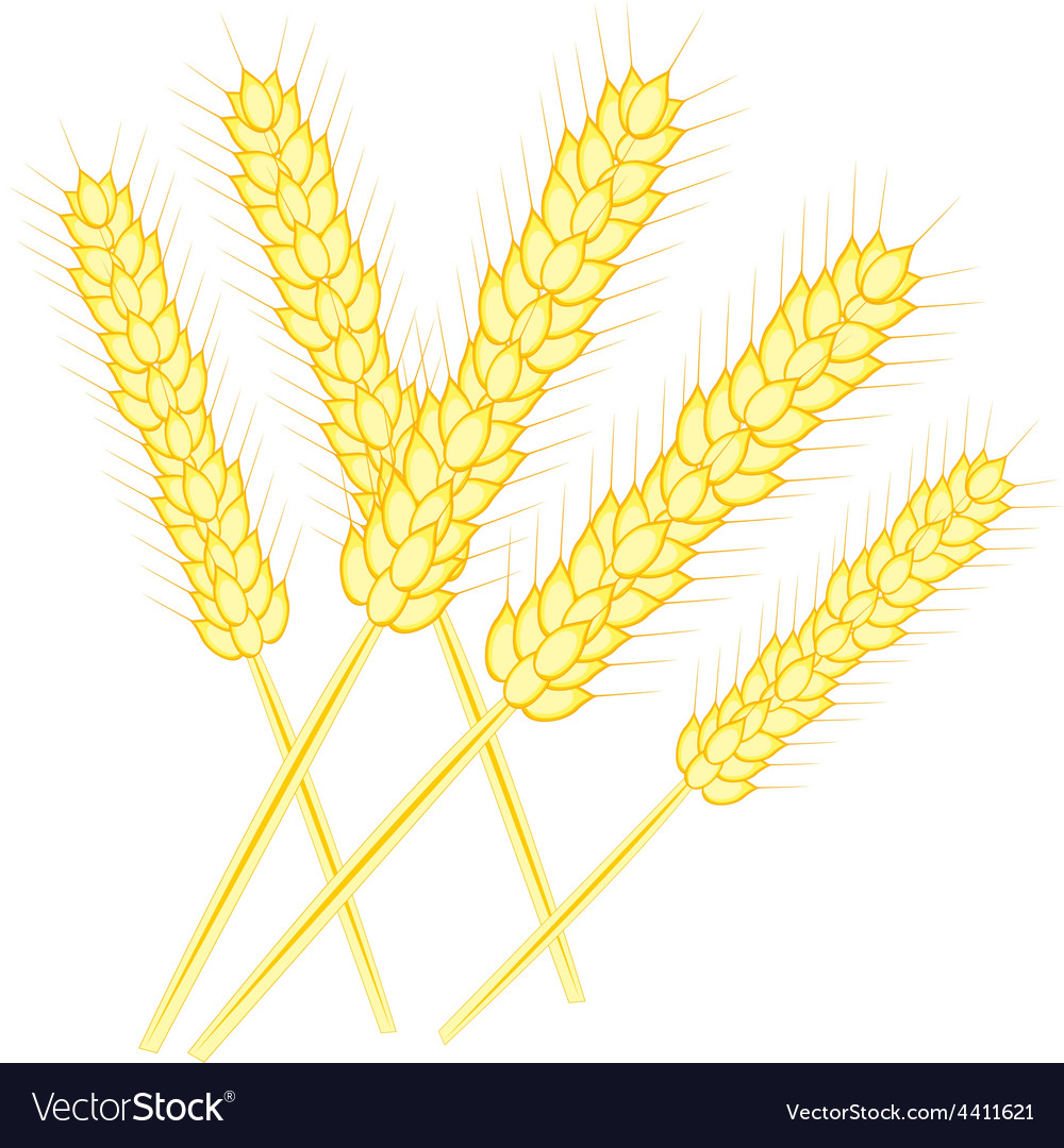 Ear of the wheat vector | Price: 1 Credit (USD $1)