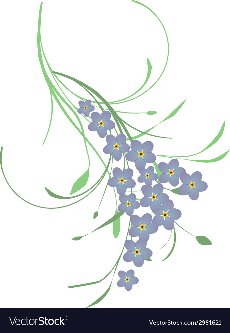 Forget me not flower vector | Price: 1 Credit (USD $1)