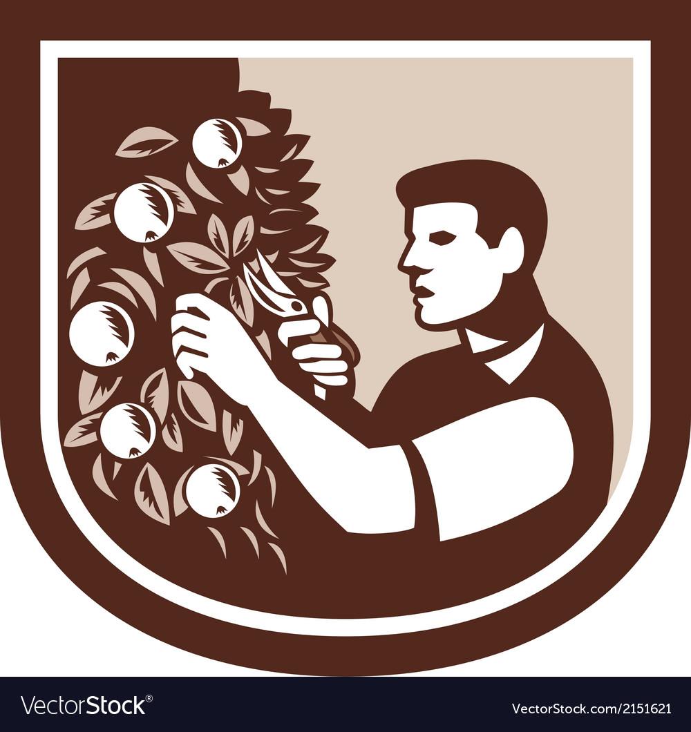 Grower orchardist gardener pruning tree vector | Price: 1 Credit (USD $1)