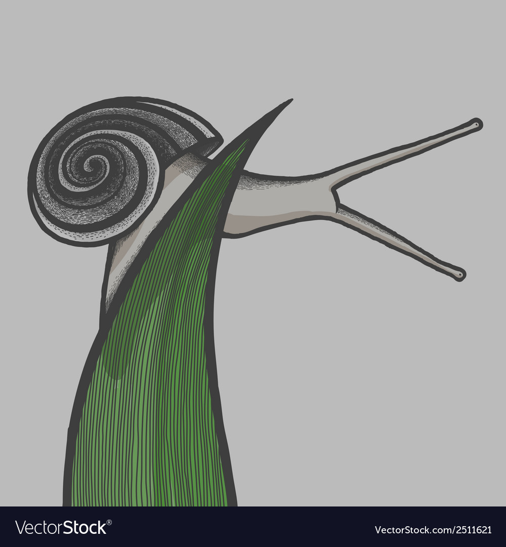 Hand draw snail on blade of gras eps10 vector | Price: 1 Credit (USD $1)