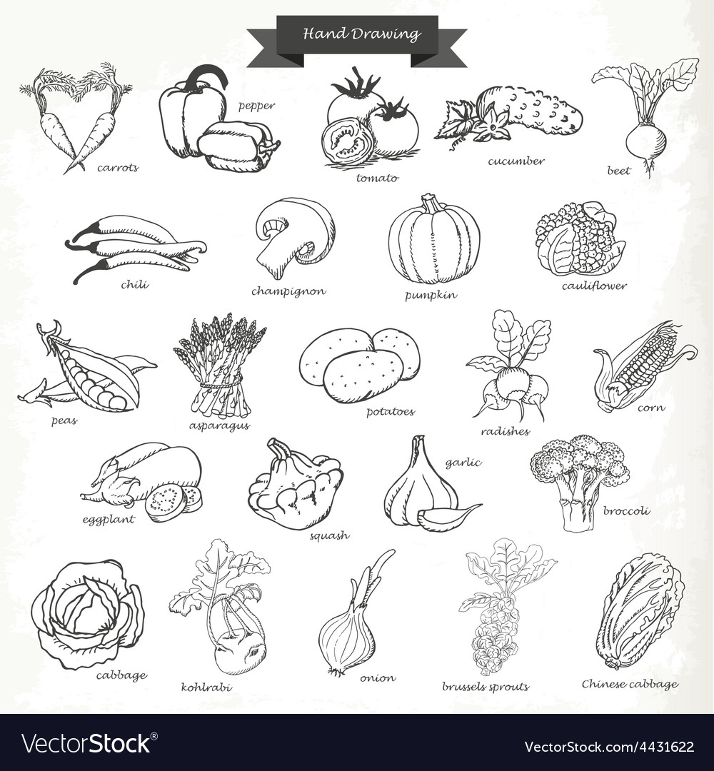 Set of vegetables hand drawing sketch vector