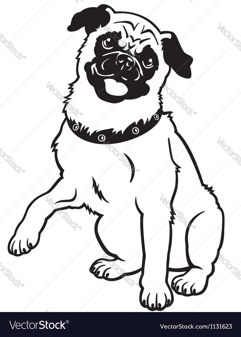 Pug black and white vector | Price: 1 Credit (USD $1)