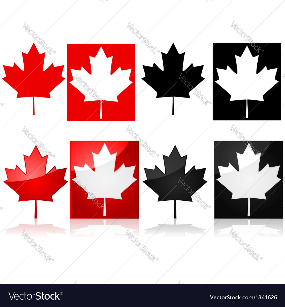 Canadian maple leaf vector | Price: 1 Credit (USD $1)