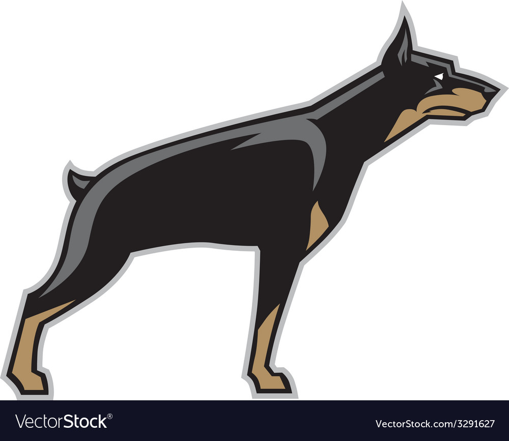 Doberman dog vector | Price: 1 Credit (USD $1)