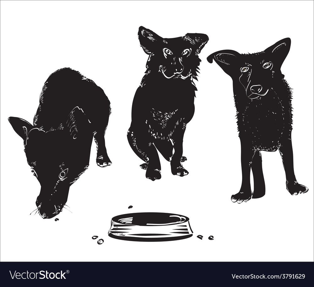Dogs near bowl vector | Price: 1 Credit (USD $1)