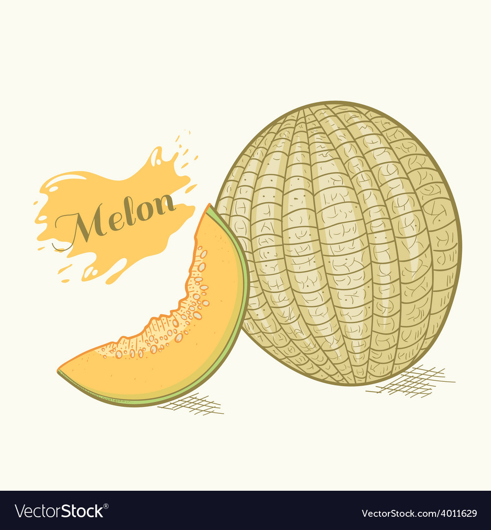 Hand drawn melon with slice vector | Price: 1 Credit (USD $1)