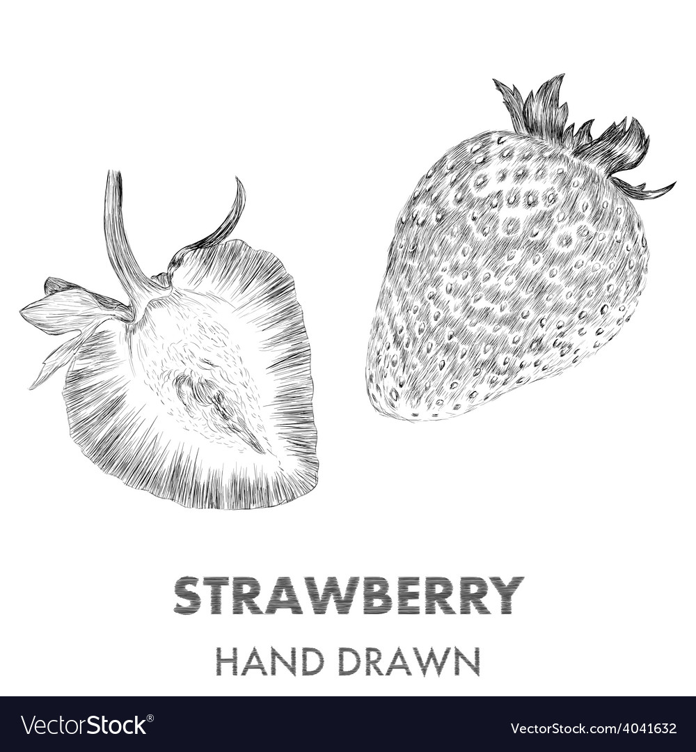 Sketch of strawberry hand drawn fruit collection vector | Price: 1 Credit (USD $1)