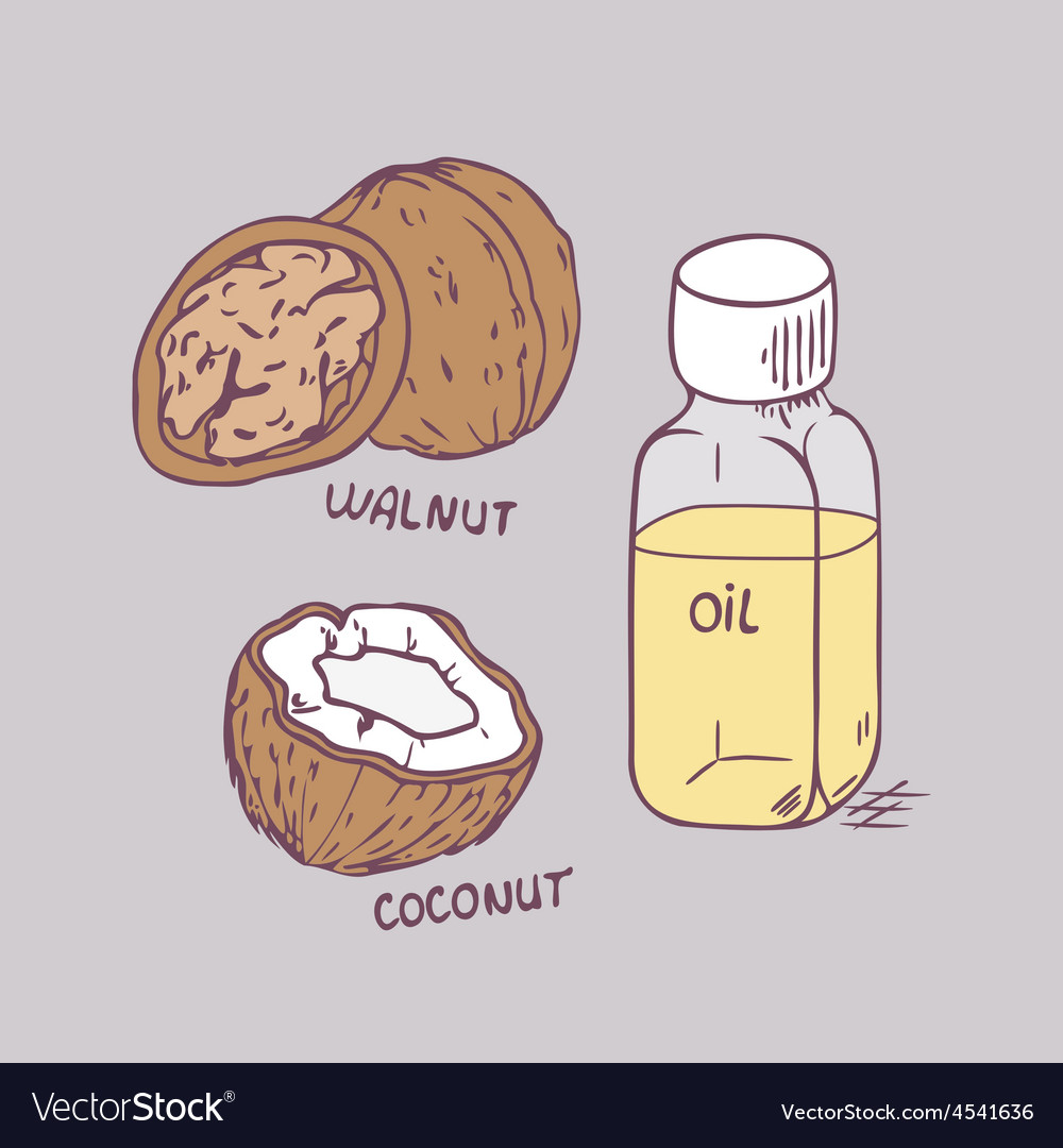 Healing coconut and walnut oils set in vector | Price: 1 Credit (USD $1)