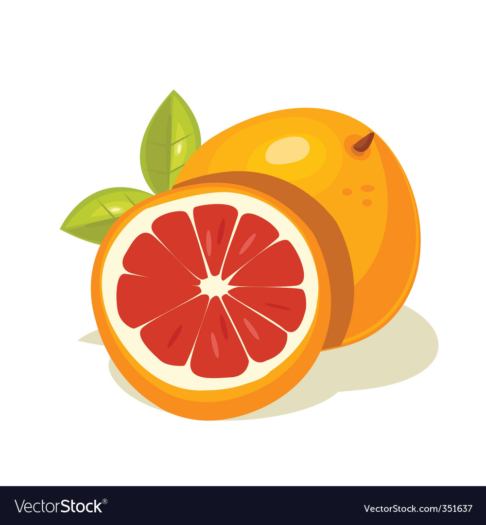 Grapefruit vector | Price: 1 Credit (USD $1)