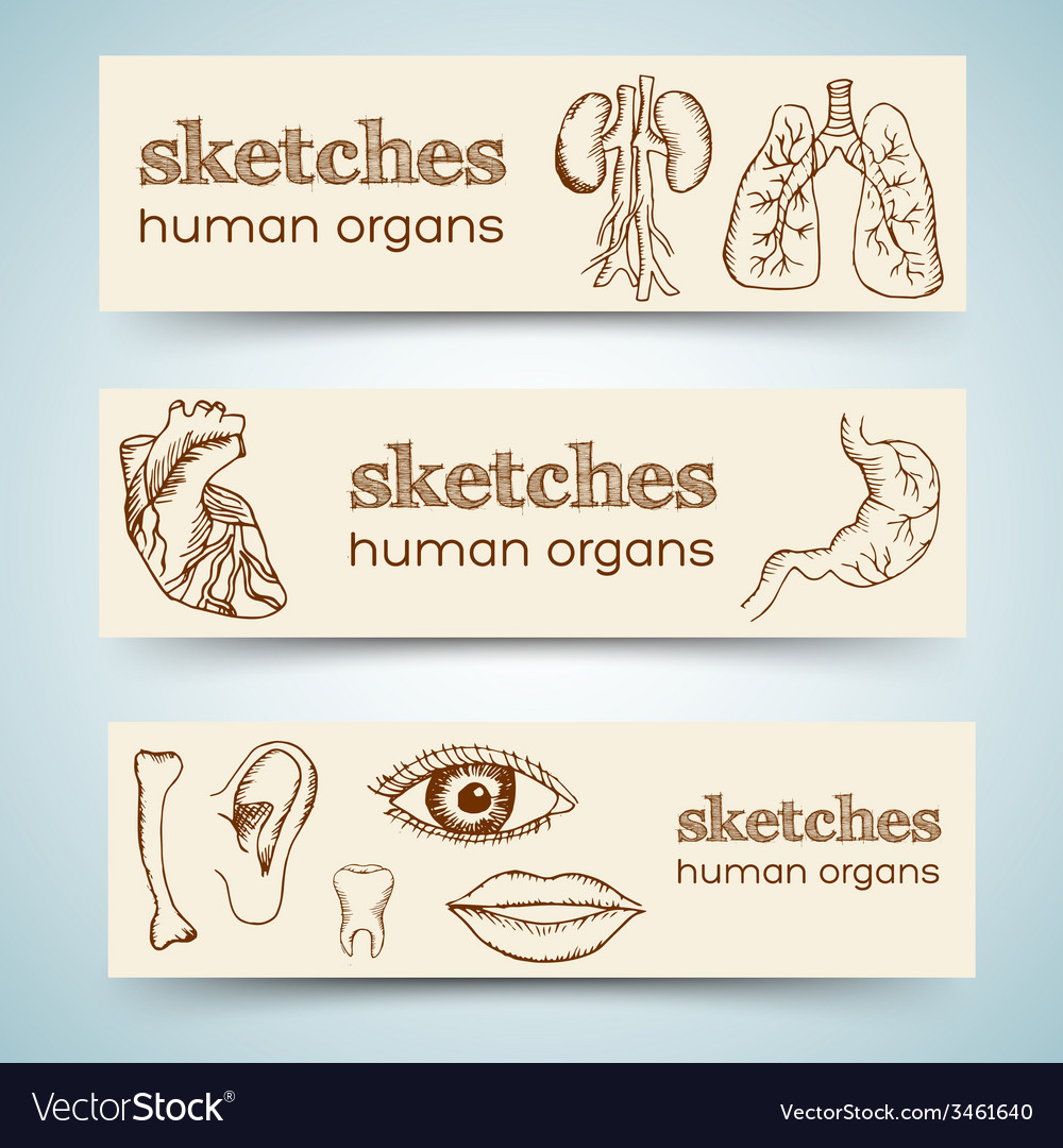 Human organs in sketches style set vertical vector | Price: 1 Credit (USD $1)