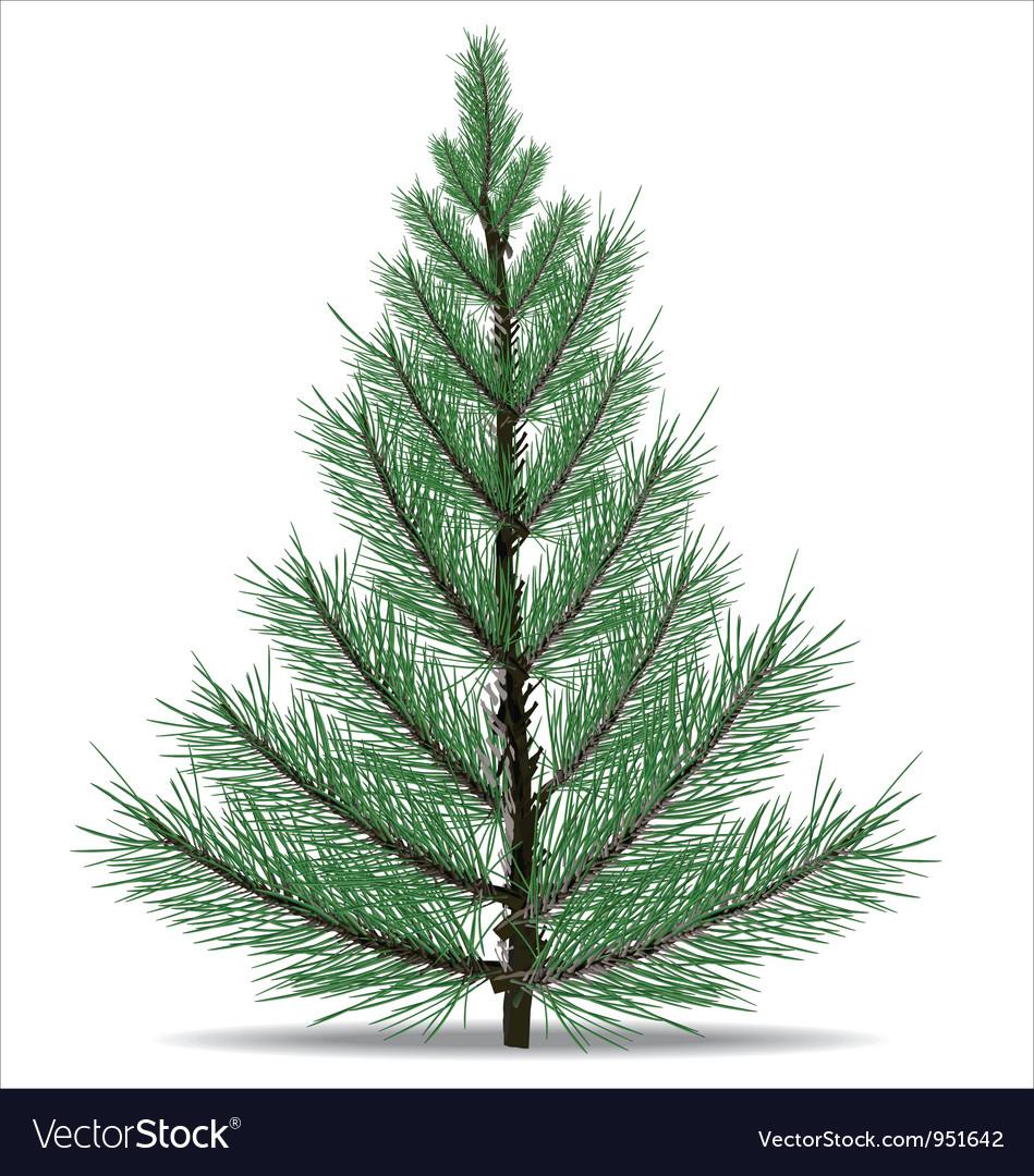 Pine tree vector   Price: 1 Credit (USD $1)