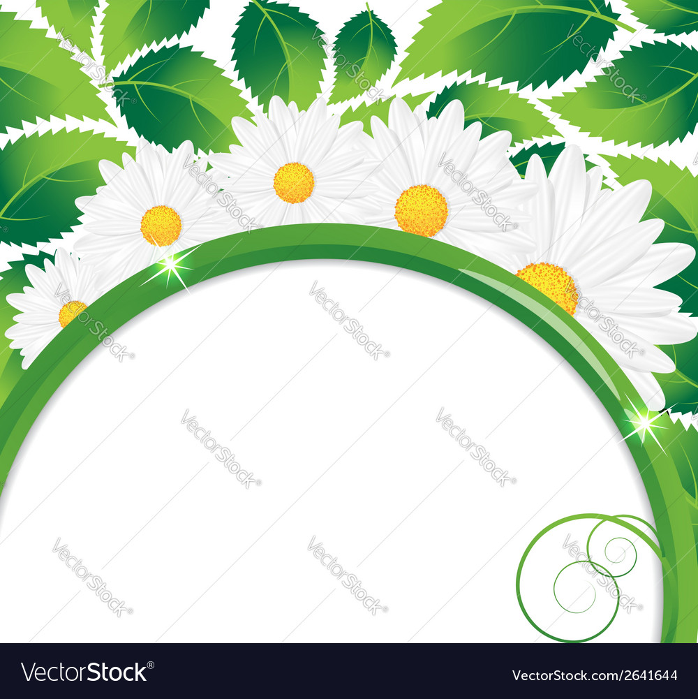 Daisies bouquet vector | Price: 1 Credit (USD $1)