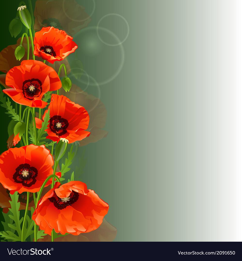 Poppy background vector | Price: 1 Credit (USD $1)