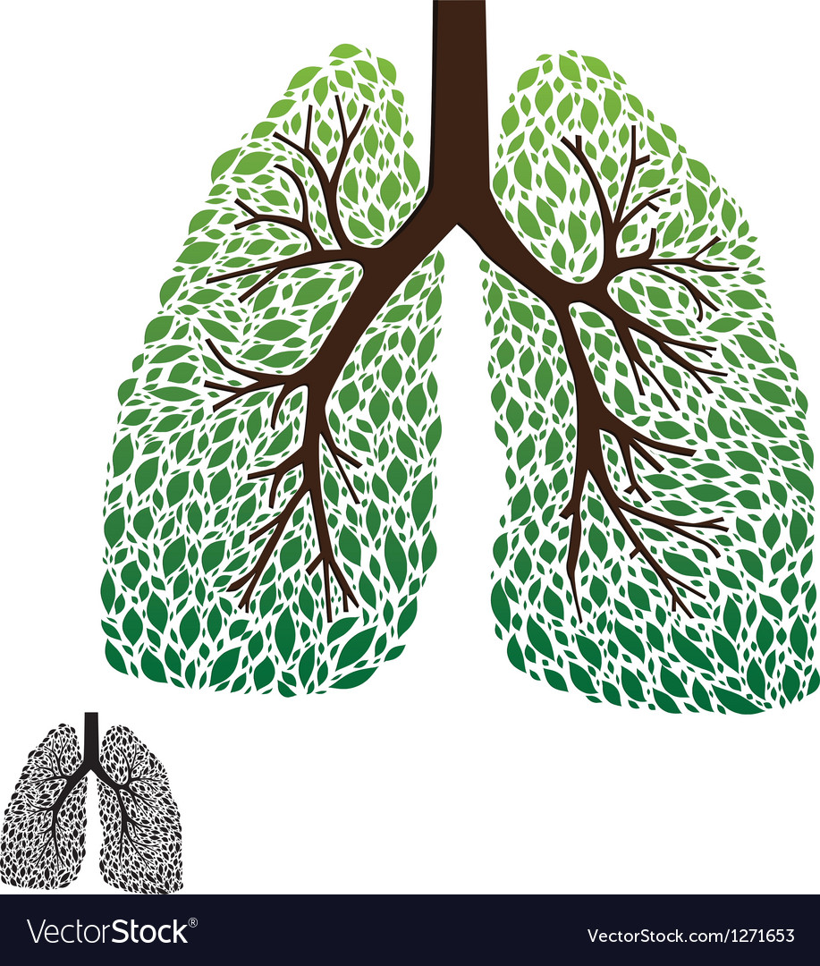 Leaf lung vector | Price: 1 Credit (USD $1)