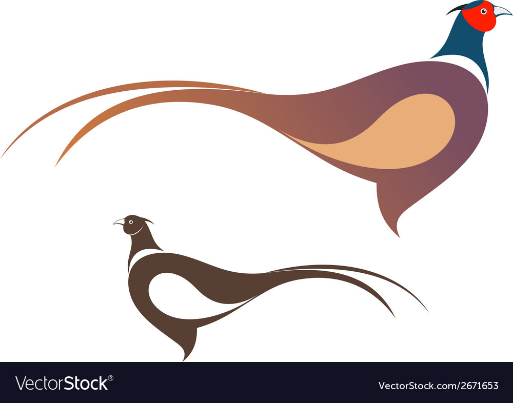 Pheasant vector | Price: 1 Credit (USD $1)