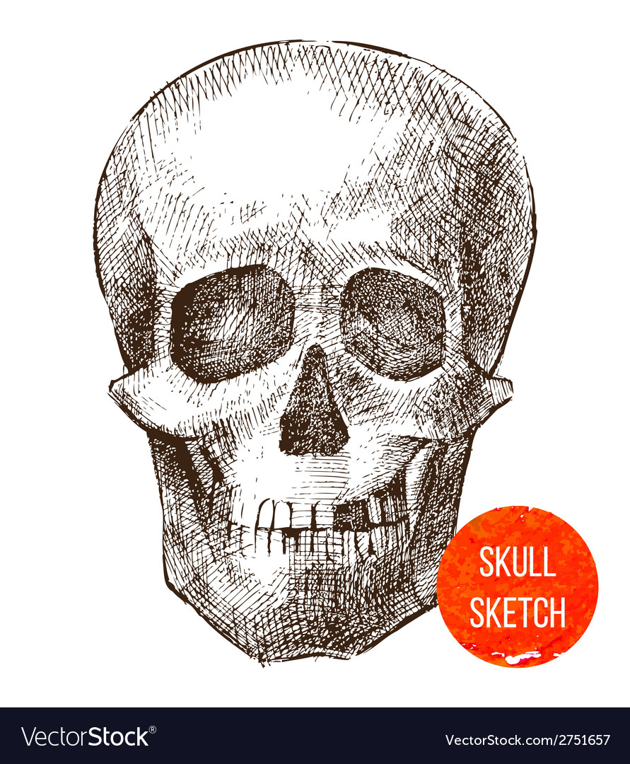 Hand drawn skull vector | Price: 1 Credit (USD $1)