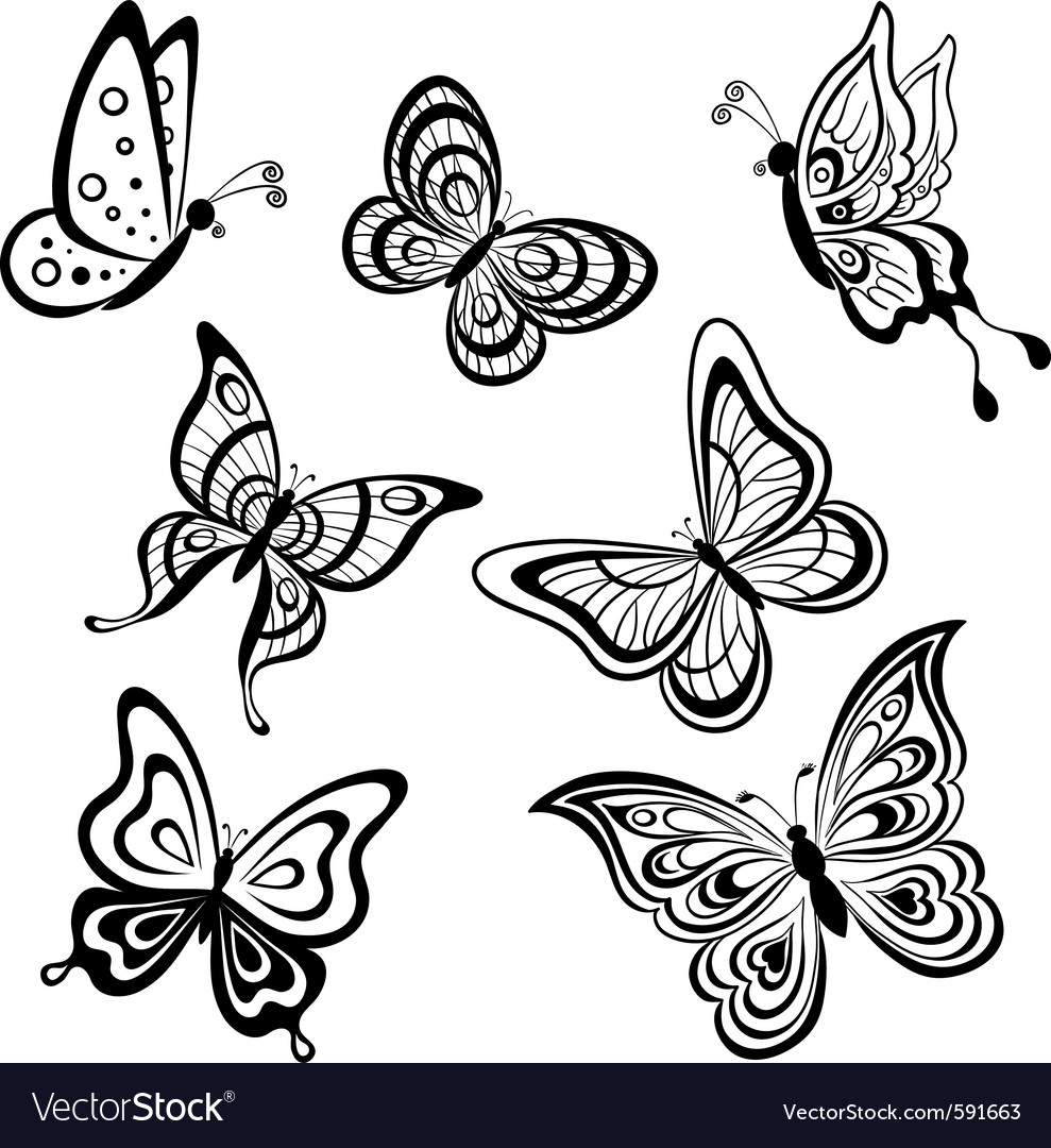 Butterflies contours vector | Price: 1 Credit (USD $1)