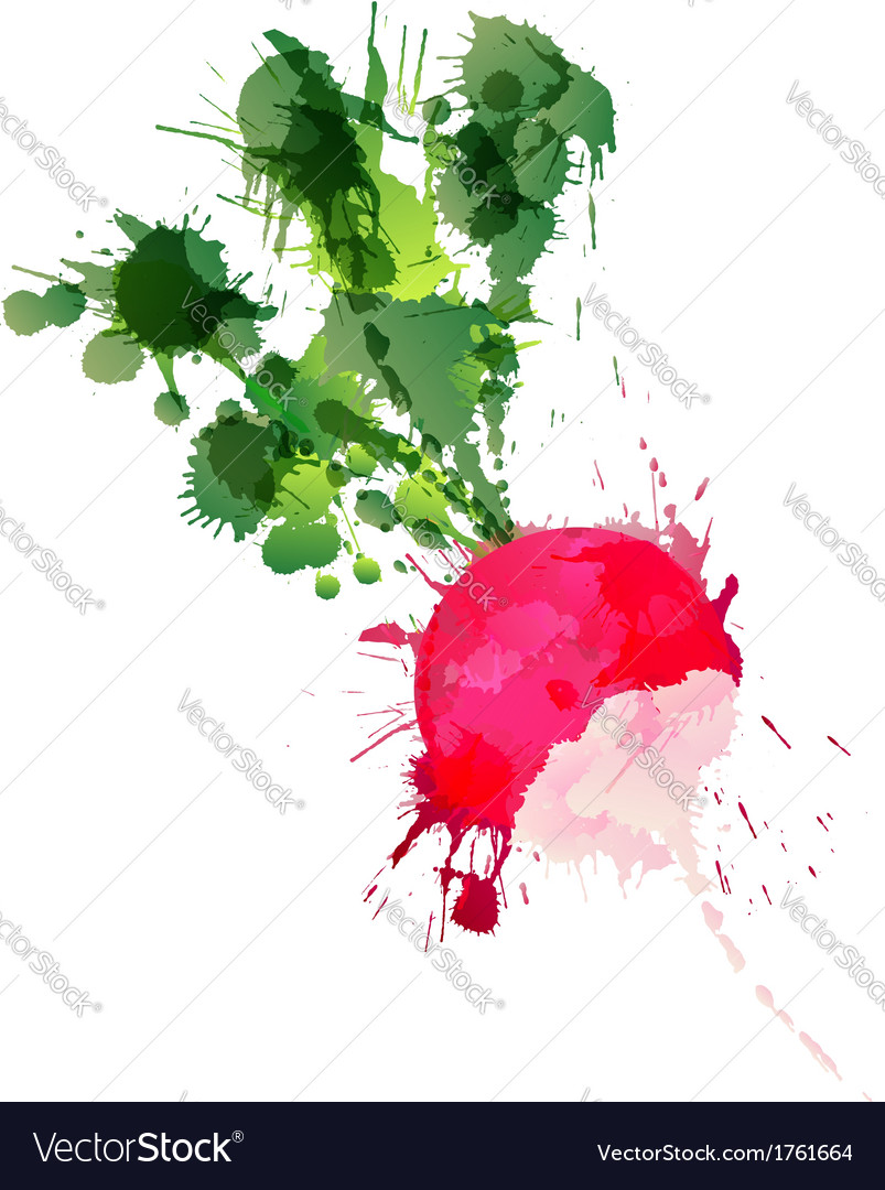 Radish made of colorful splashes vector | Price: 1 Credit (USD $1)