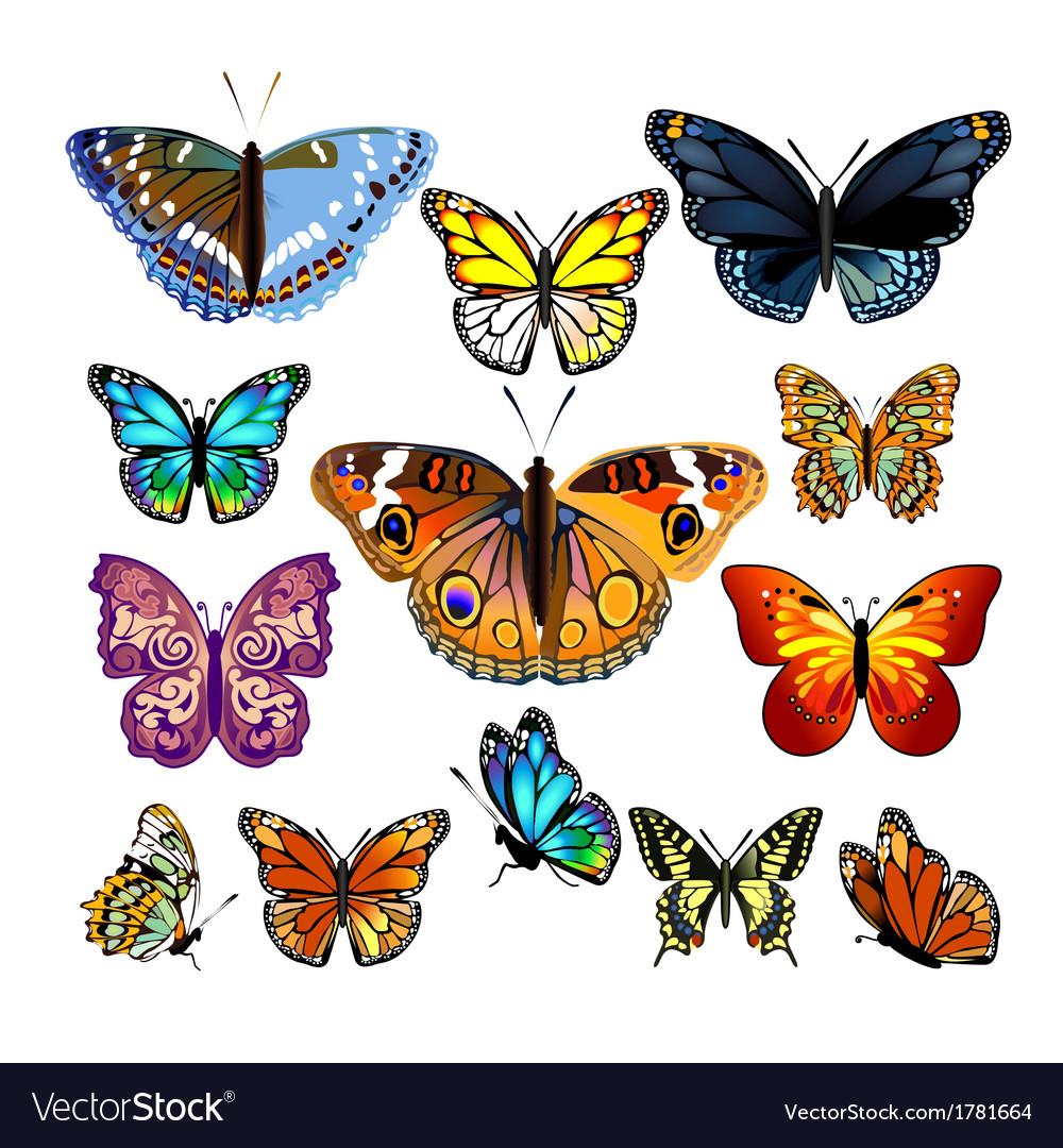 Set of colorful realistic isolated butterflies vector | Price: 1 Credit (USD $1)