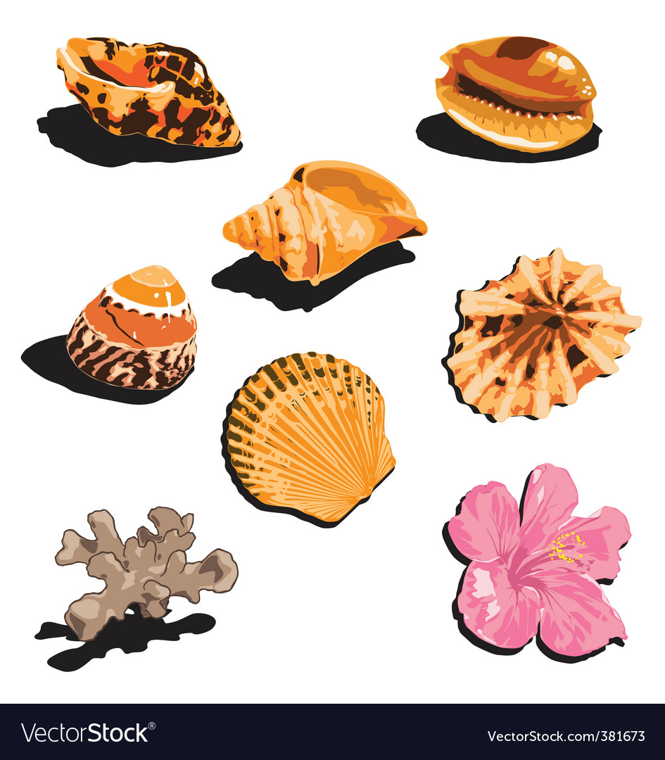 Shells vector | Price: 1 Credit (USD $1)