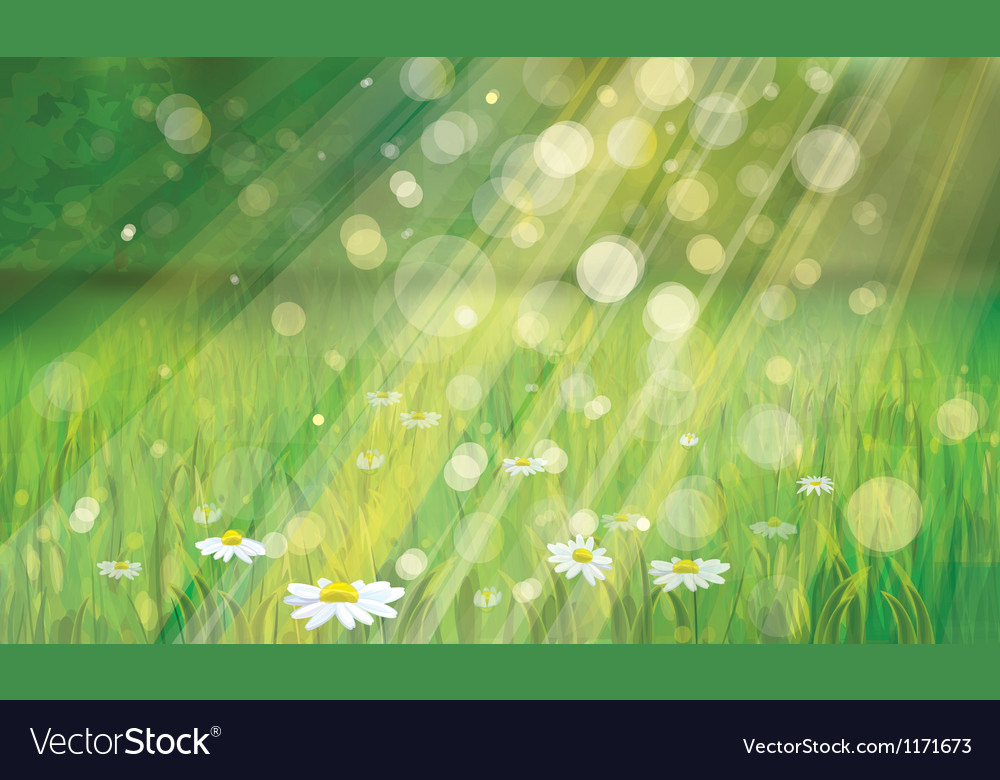 Spring background with white daisies vector | Price: 1 Credit (USD $1)