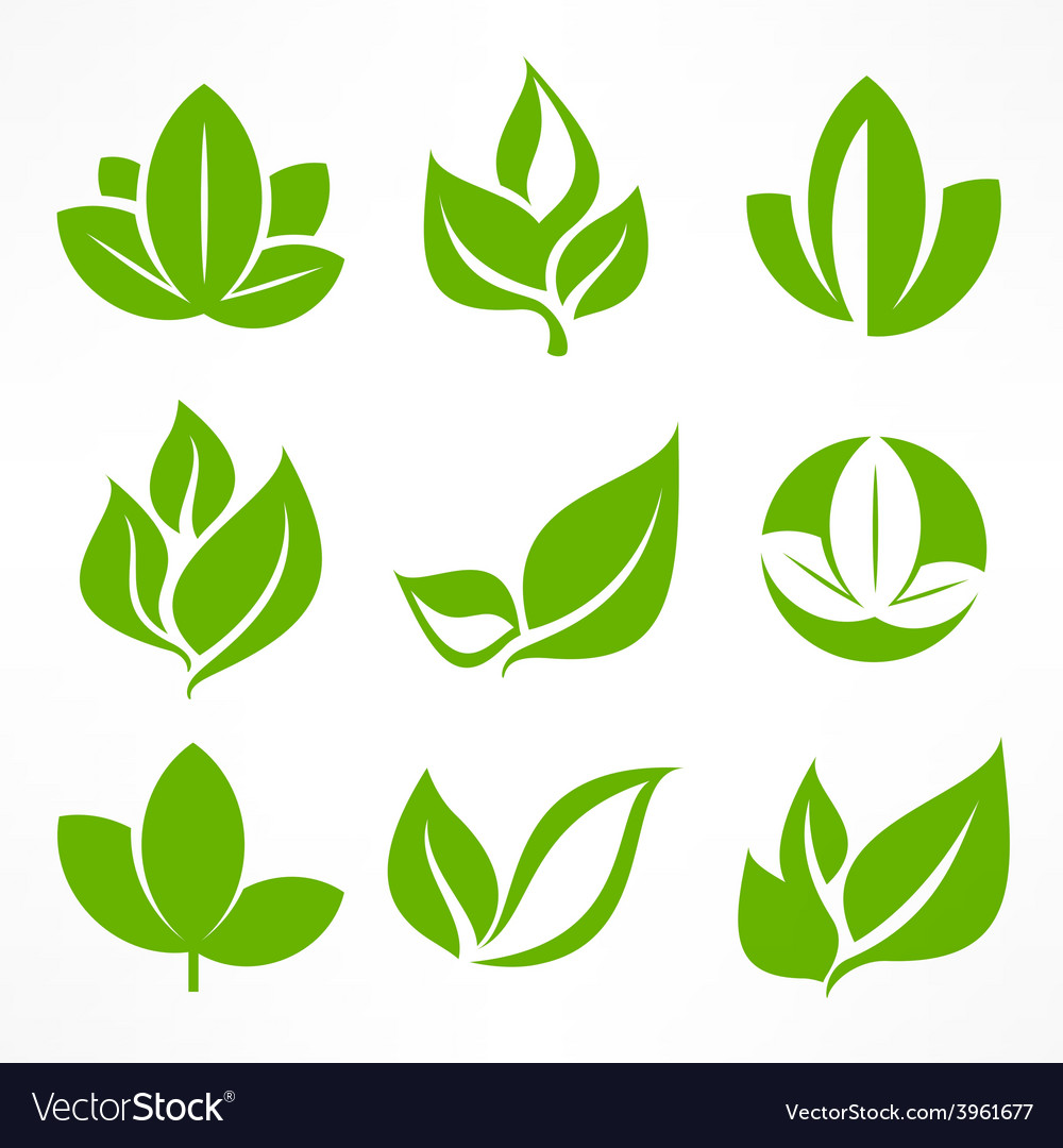Green leaf signs vector