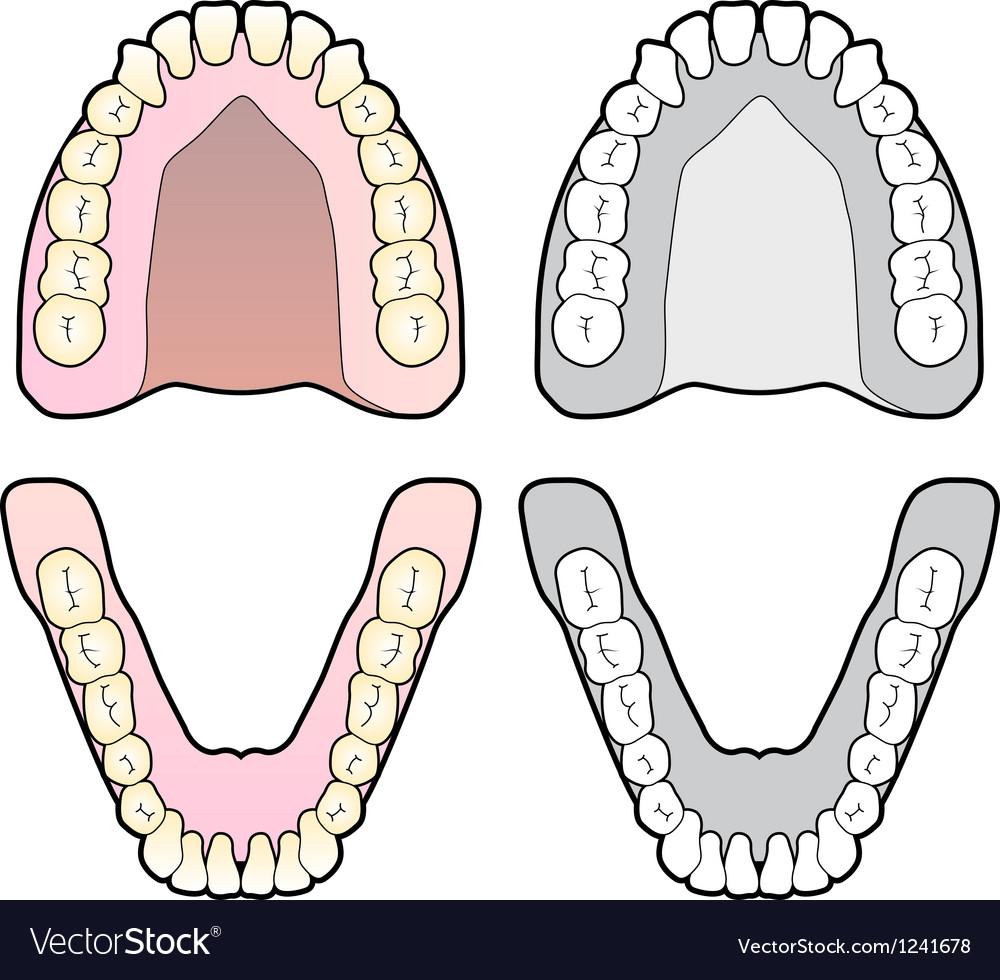 Tooth chart vector | Price: 1 Credit (USD $1)
