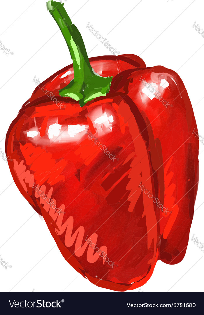 Red pepper hand drawn vector | Price: 1 Credit (USD $1)