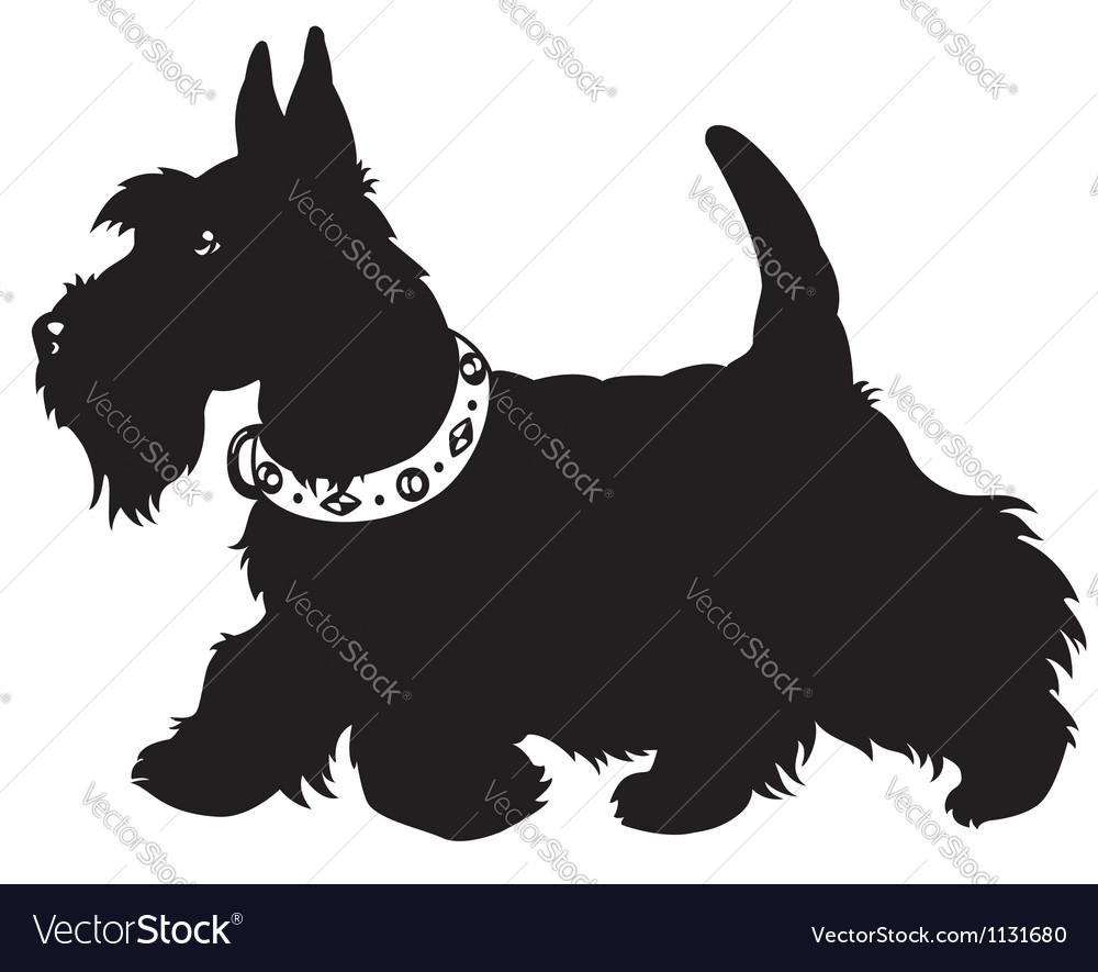 Scottish terrier black and white vector | Price: 1 Credit (USD $1)