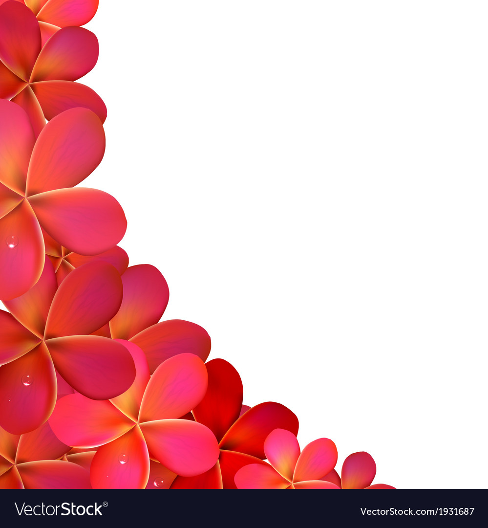 Frangipani frame with water drops vector | Price: 1 Credit (USD $1)