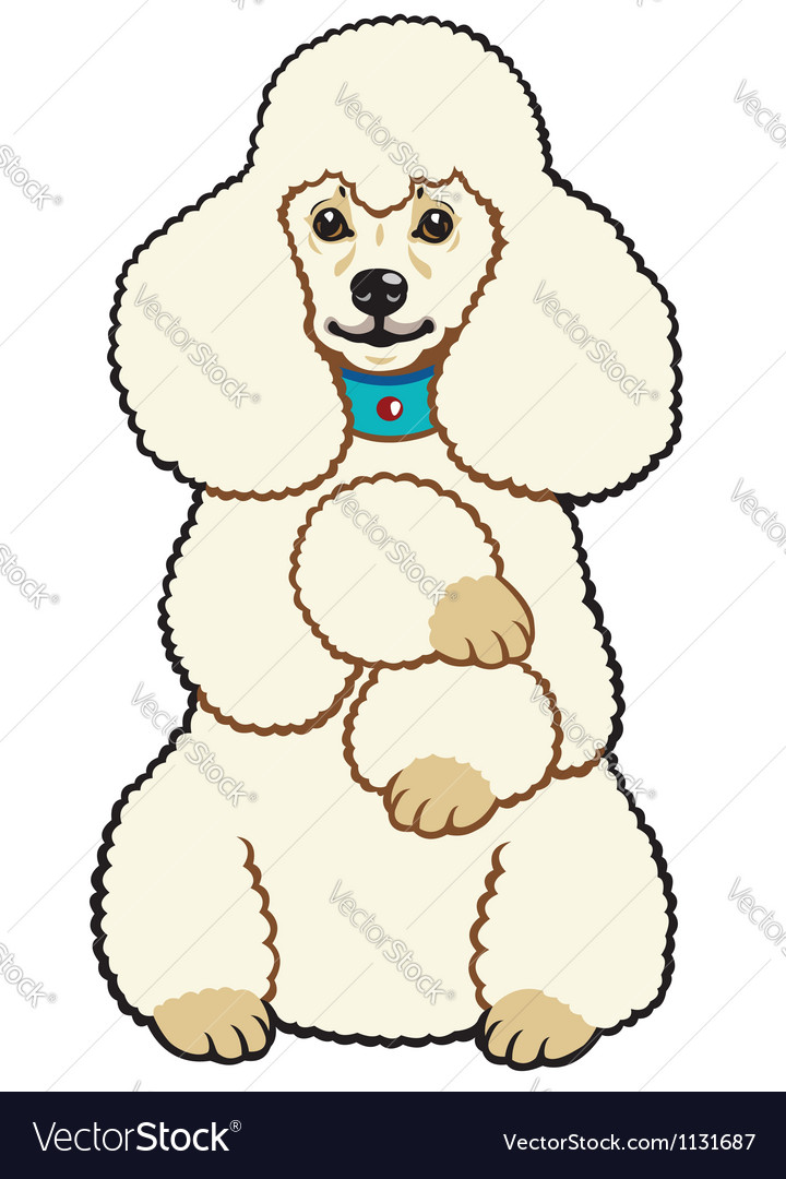 White poodle vector | Price: 1 Credit (USD $1)