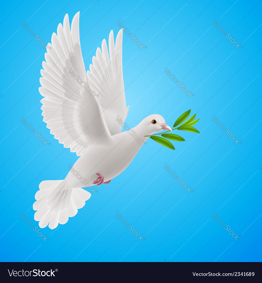 Fly dove vector | Price: 1 Credit (USD $1)