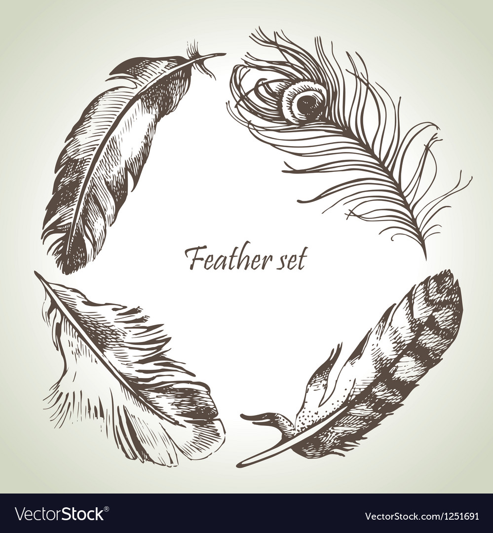 Feather set hand drawn vector | Price: 1 Credit (USD $1)