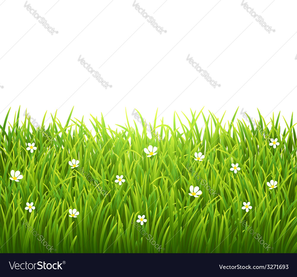 Green isolated grass with flowers on white vector | Price: 1 Credit (USD $1)