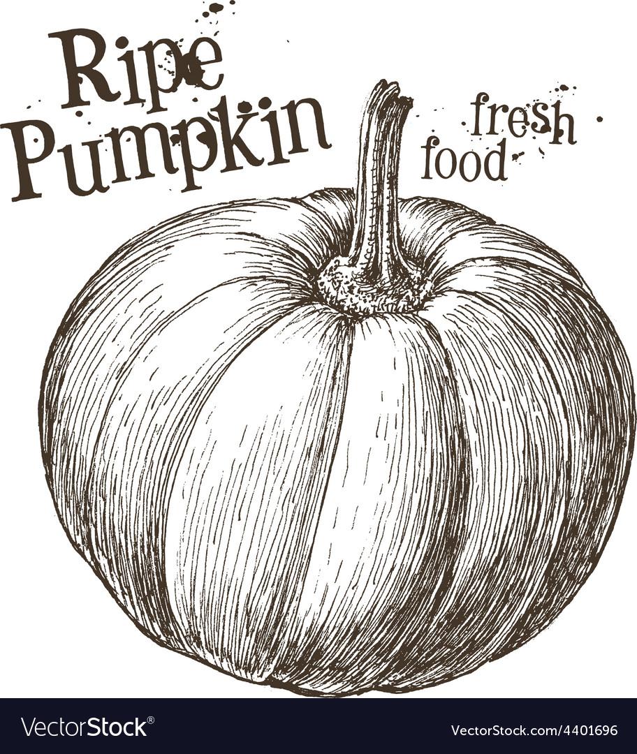Pumpkin logo design template fresh vector   Price: 3 Credit (USD $3)